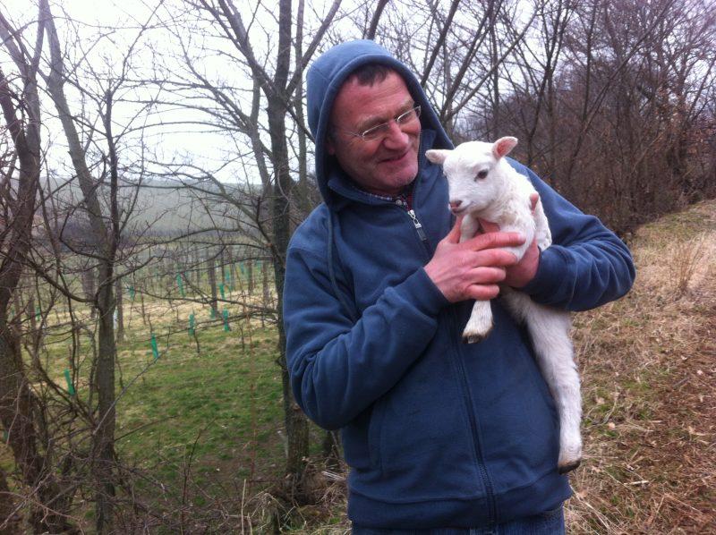Josef Umathum mit Schaf