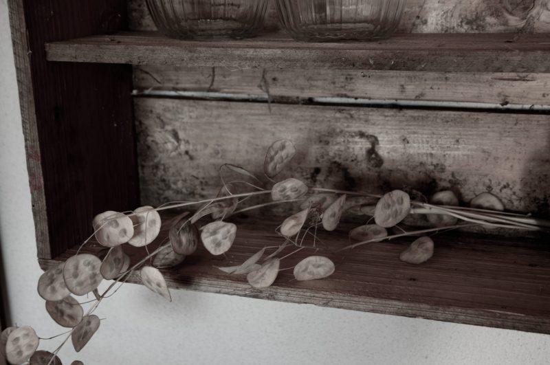 Eine getrocknete Pflanze in der Werkstatt